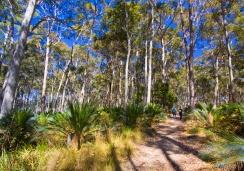 Native Australian bushland