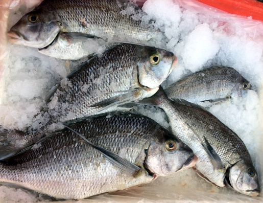 fresh-sea-bass