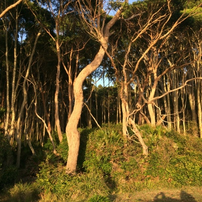 See ancient forests