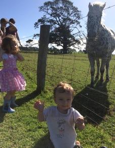 oakleigh-horse