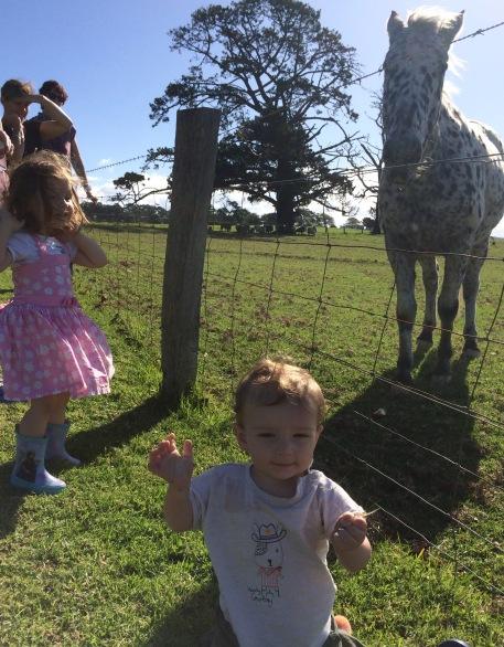 Farm experiences
