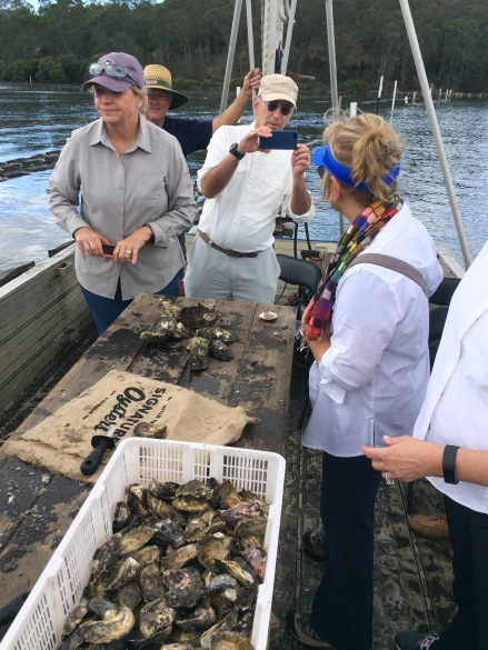 Sample local oysters