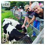 Calf feeding in historic Bodalla